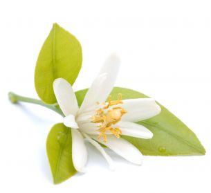 Massage orientale à la fleur d'oranger à domicile sur Segré